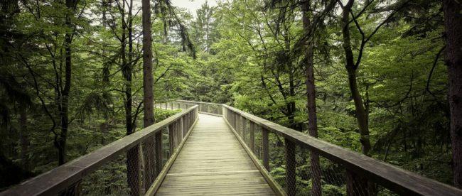 Brücke im Bayrischen Wald