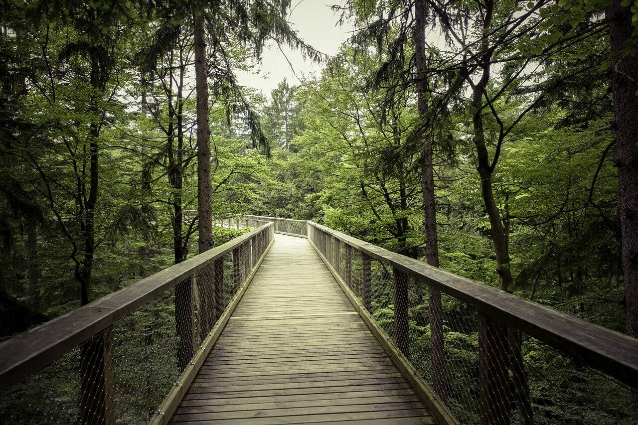 Fussgängerbrücke-im-Bayrischen-Wald